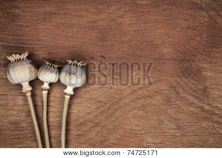 poppyheads full of poppyseeds on the table
