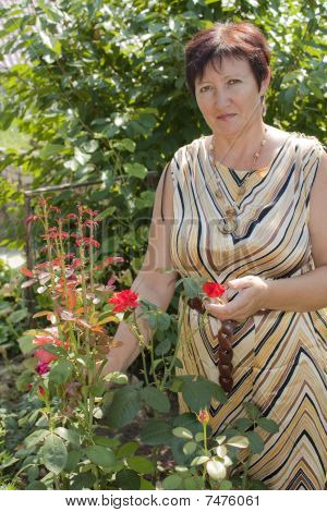 The Woman With Own To A Garden Shows A Bush Of Red Roses