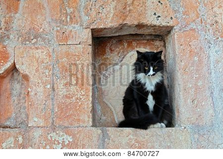 Serious black cat in an old brick wall niche