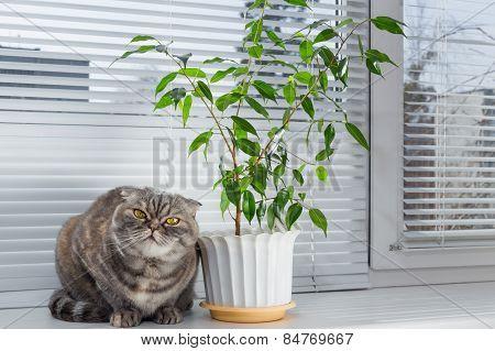 Sad cat on the windowsill.