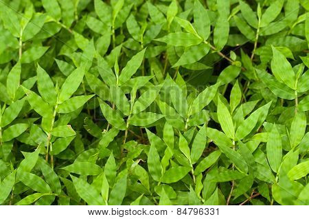 Fresh Green Grasses On Ground