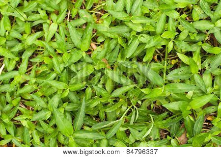 Pattern Of Green Grasses As Background