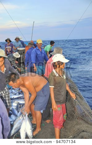 Nha Trang, Vietnam - May 5, 2012: Fishermen Are Collecting Tuna Fish Caught By Trawl Nets In The Sea
