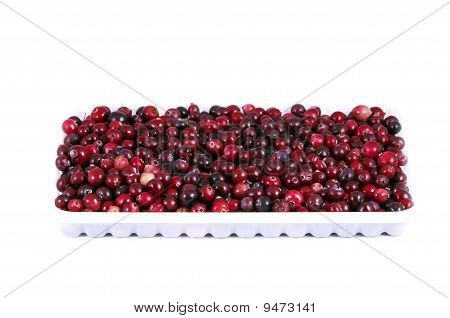 Wild Ripe Red Cranberry And  White Plastic Tray Over White