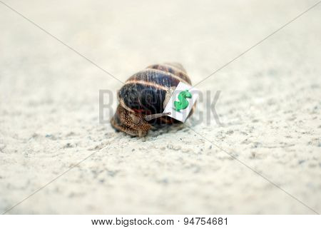 Picture of Snail with with symbols of money on a shell