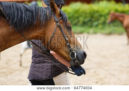 Horserider On The Arena