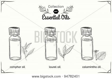 A set of essential oils in black and white style: camphor, Laurel, calamintha.