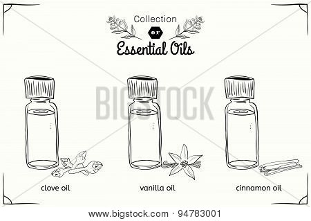 A set of essential oils in black and white style: cloves, vanilla, cinnamon.