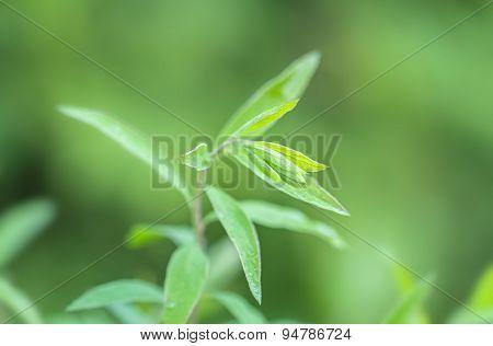 Green  Small Branch