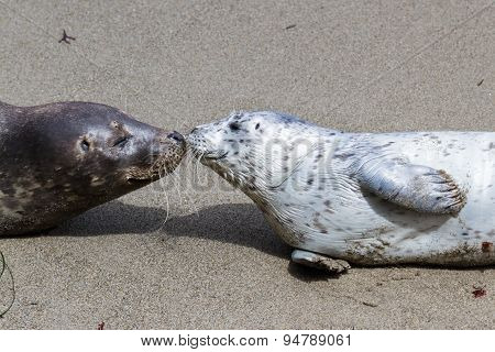 Baby Seal And His Mother