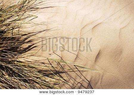 Wind blown grass on sand dune