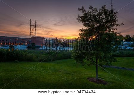 Lone Tree At Harbor Sunset