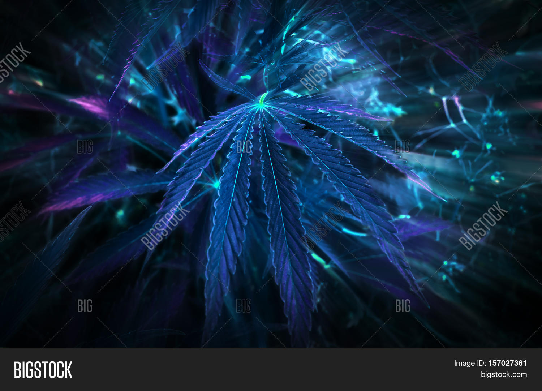 Neon Leaf Cannabis Image Photo Free Trial Bigstock