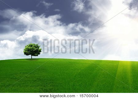 Spring landscape with a lone tree on a hill