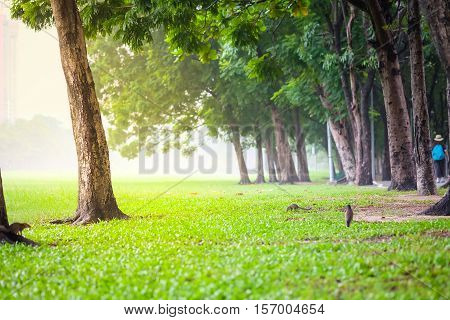 Fresh green park in a city filled with pollution. Vachirabenjatas Park (Rot Fai Park) in Bangkok.