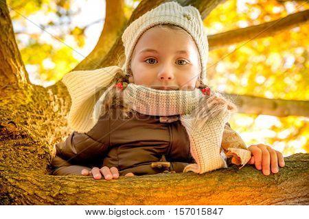 little girl climbing tree in fall season