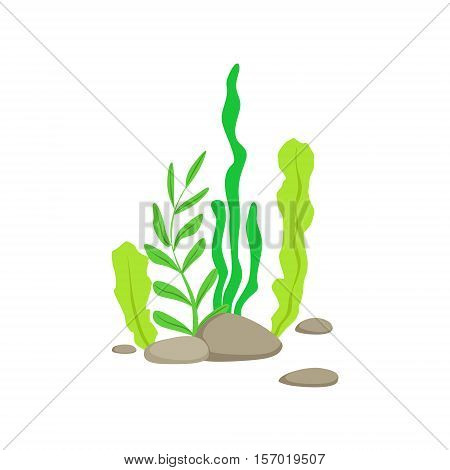 Set Of Different Bottom Underwater Algae Growing On The Rock. Colorful Cartoon Sea Nature Vector Illustration On White Background.