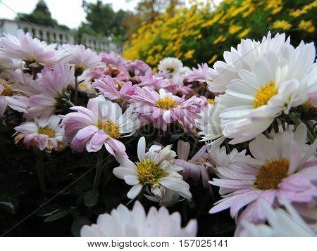 osservare dei fiori cambiando il punto di vista