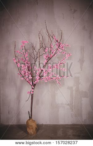blossoming pink sacura tree on a gray background