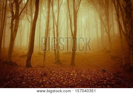 Spooky forest in the national park of foreste casentinesi in Tuscany