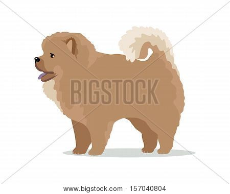 Chow-chow dog breed flat design vector. Purebred pet. Domestic friend and companion animal illustration. For pet shop ad, animalistic hobby concept, breeding illustration. Cute canine portrait.