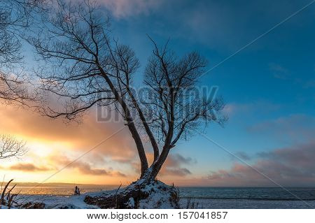 The etude with a lonely tree on the snow-covered coast against the background of a decline at the beginning of winter.