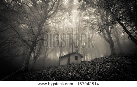 Abandoned haunted house in the magic forest