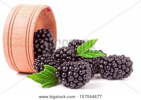 blackberries spilled from wooden bowl isolated on white background.