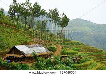 Home of the hmong in Yen BaiMu Cang Chai Vietnam.
