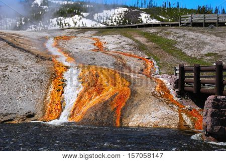 The colorful bacteria remain alive in the flowing waters due to the heat arising from the active volcano that Yellowstone rest above.