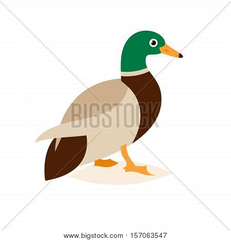 Cartoon caricature domestic duck and cartoon duck comic happy animal. Vector illustration isolated on white background.
