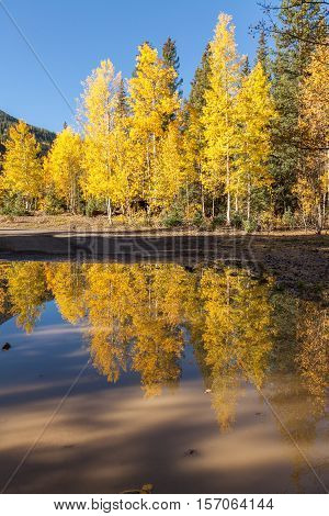 a scenic reflection of aspen trees in a pond in fall
