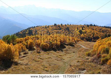 Beautiful golden autumn forest on the top of the mountain, Caucasus mountains, Svaneti, Georgia, Europe