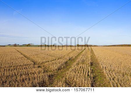 Cross Lines In Straw Stubble