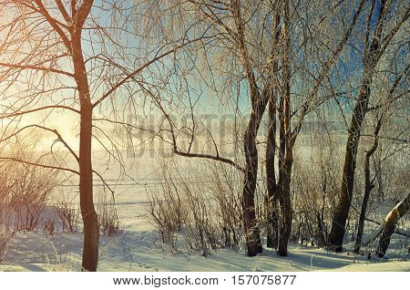 Winter landscape -frosted trees near the winter river at the sunrise. Winter background of winter nature in vintage tones - winter sunny wonderland. Winter scene in the morning