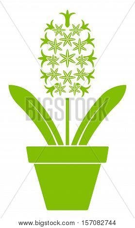vector hyacinth in pot isolated on white background