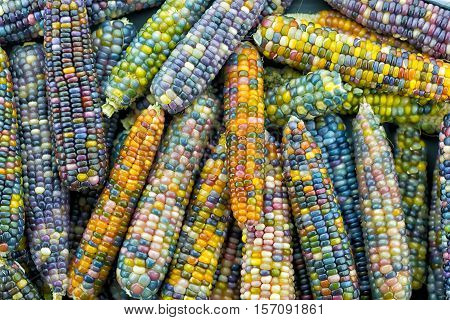 glass gem earsvariety of rainbow colored corn