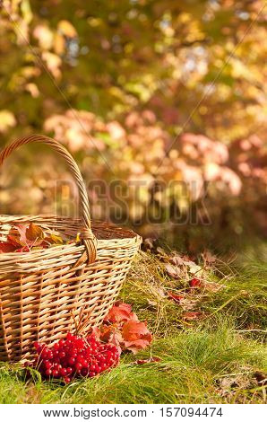 Beautiful Autumn. Autumn Harvest In Basket