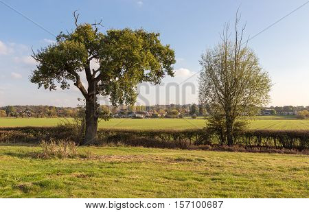 Two trees in the autumnal Essex countryside