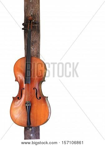 Cello on white background for music, with clipping path.