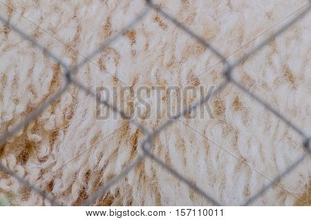 abstract background macro image of Wool of sheep in cages