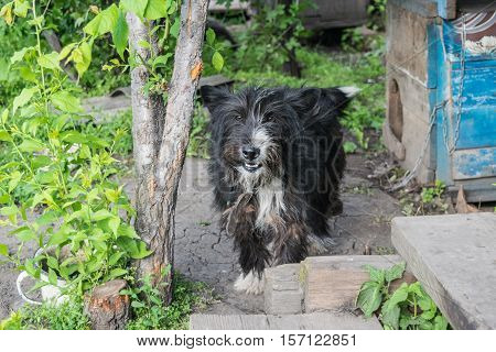 Black mongrel dog near rural wooden doghouse