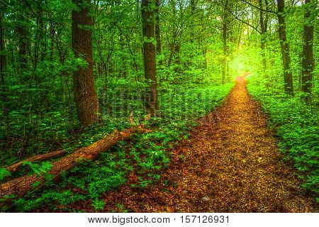 Colorful summer landscape. Pathway in the woods. Green trees around a lane. The bright colors of nature in the park.