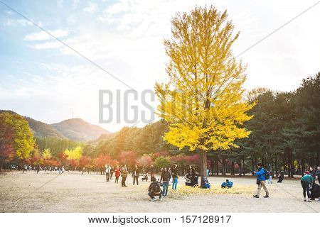 NAMI ISLAND KOREA - OCT 28: Tourists taking photos in autumn around Nami Island. Photo taken on October 28 2016 in South Korea.