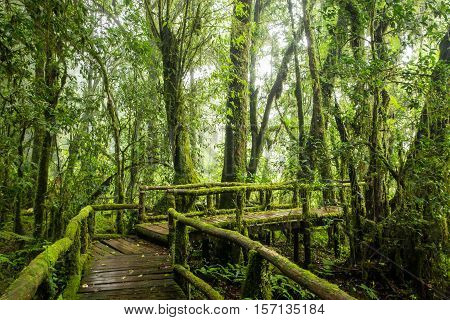 Rainforest in the mist, foggy rainforest background, mossy boardwalk in rainforest. Soft focus due to long exposure.