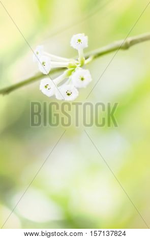 sweet dreamy and de-focused background floral border of green leaves and white flowers