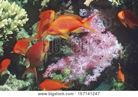 Anemone Fish at the bottom of the ocean