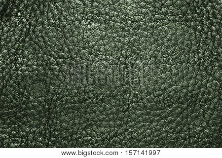 Green leather texture or leather background. Leather sheet for making leather bag leather jacket furniture and other. Abstract leather pattern for design with copy space for text or image.