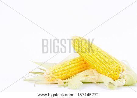 ear of  sweet corn on cobs kernels or grains of ripe corn on white background corn vegetable isolated
