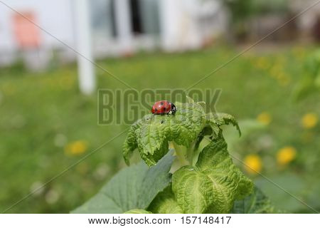 Insects / Ladybird sitting on a plant
